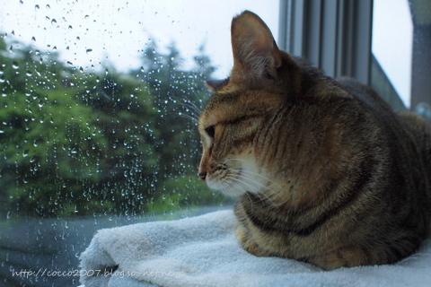 雨の日は眠い。.jpg